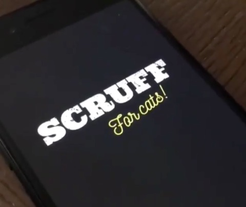 scruff-for-cats