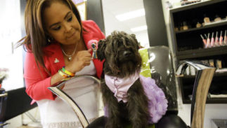 Jessica Silva pets her brothers dog, Juicy at in the re-opening of the D'Magazine Salon Thursday, Dec. 8, 2016, in Orlando, Fla. Silva's brother Juan Rivera Velazquez, the original owner of the salon and partner Luis Daniel Conde, were both killed in the Pulse nightclub shooting.