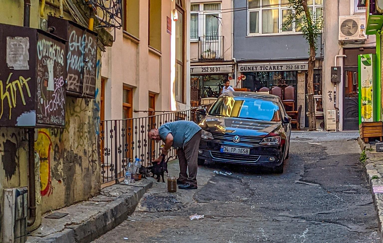 Michael Jensen, cats, Istanbul, gay travel